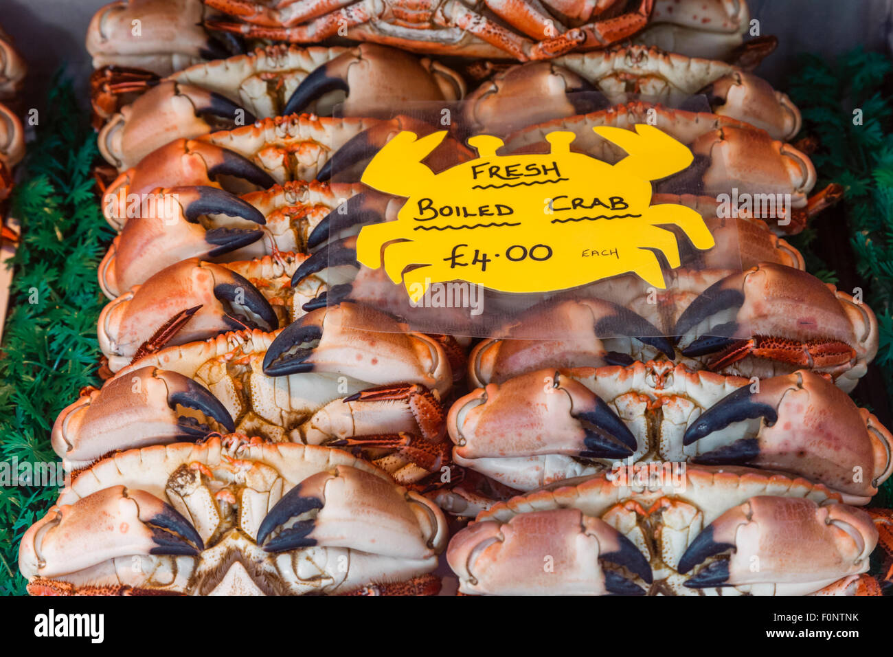 Freshwater fish england - England Norfolk Cromer Fish Shop Display Of Cromer Crabs