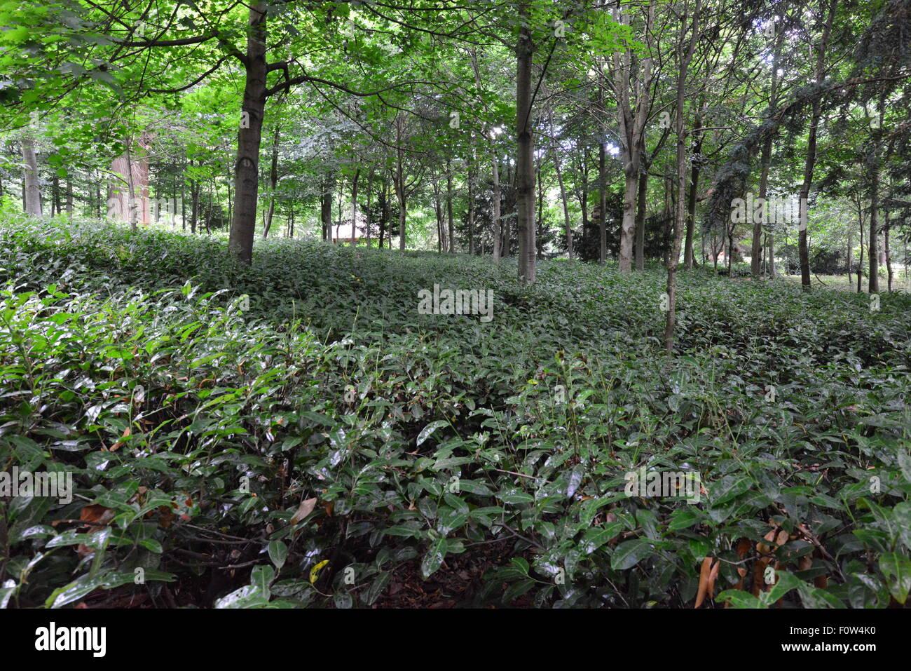 Claremont landscape gardens in surrey england stock photo royalty claremont landscape gardens in surrey england workwithnaturefo
