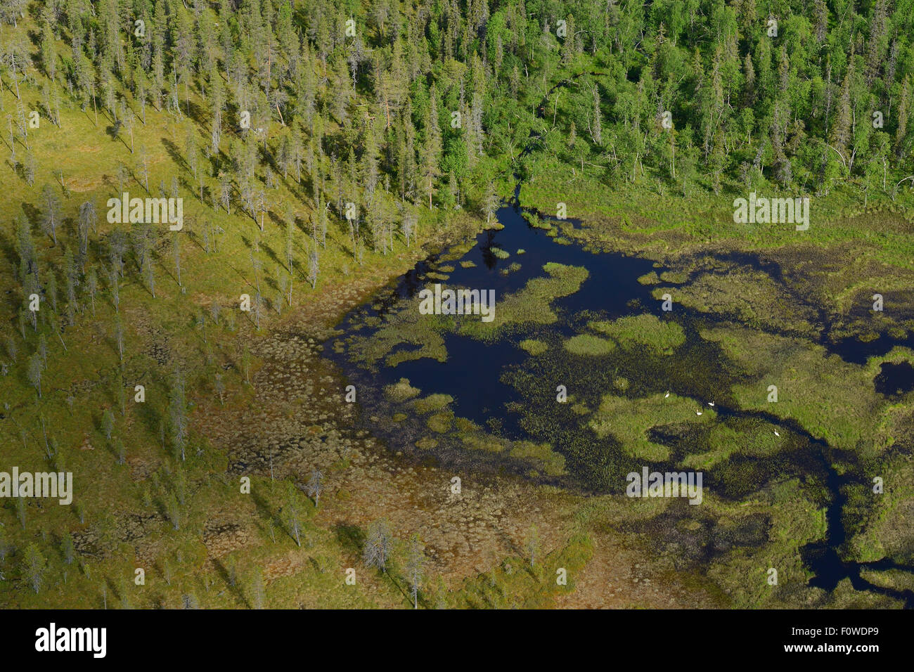 Aerial view of peat bogs and taiga boreal forest, Sjaunja Bird ...