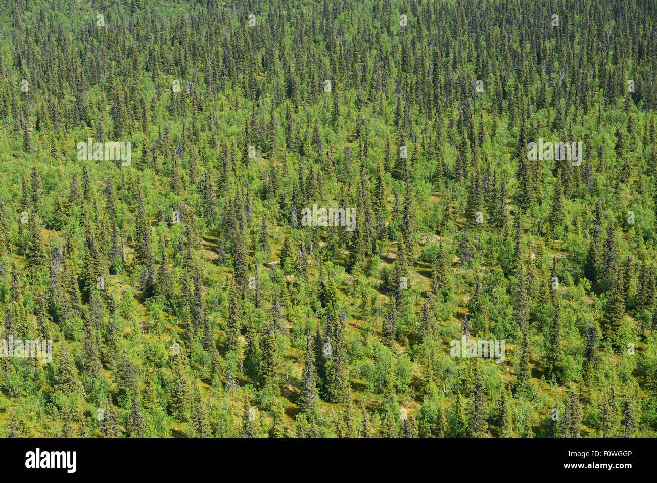 Aerial view of taiga boreal forest, Sjaunja Bird Protection Area ...