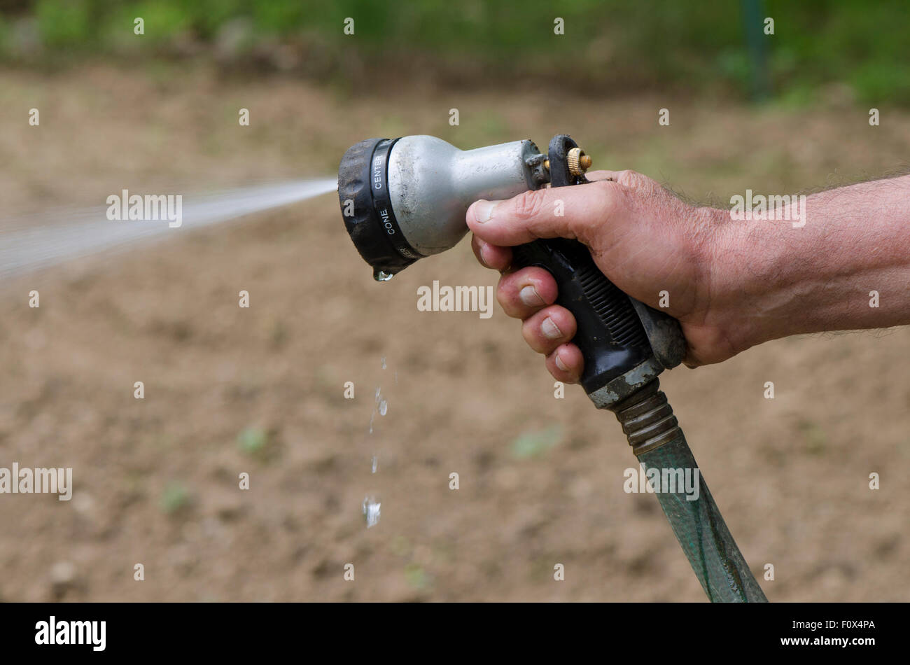 Watering Vegetable Garden Manually With A Hose. USA