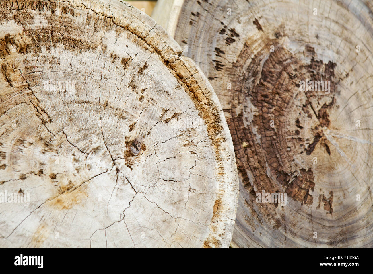 old and annual photo natural teak cracks wood rings stumps background with stock