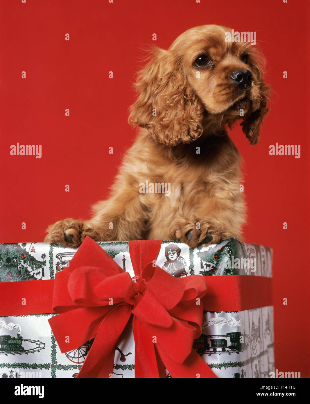 Red Ribbon On Dog
