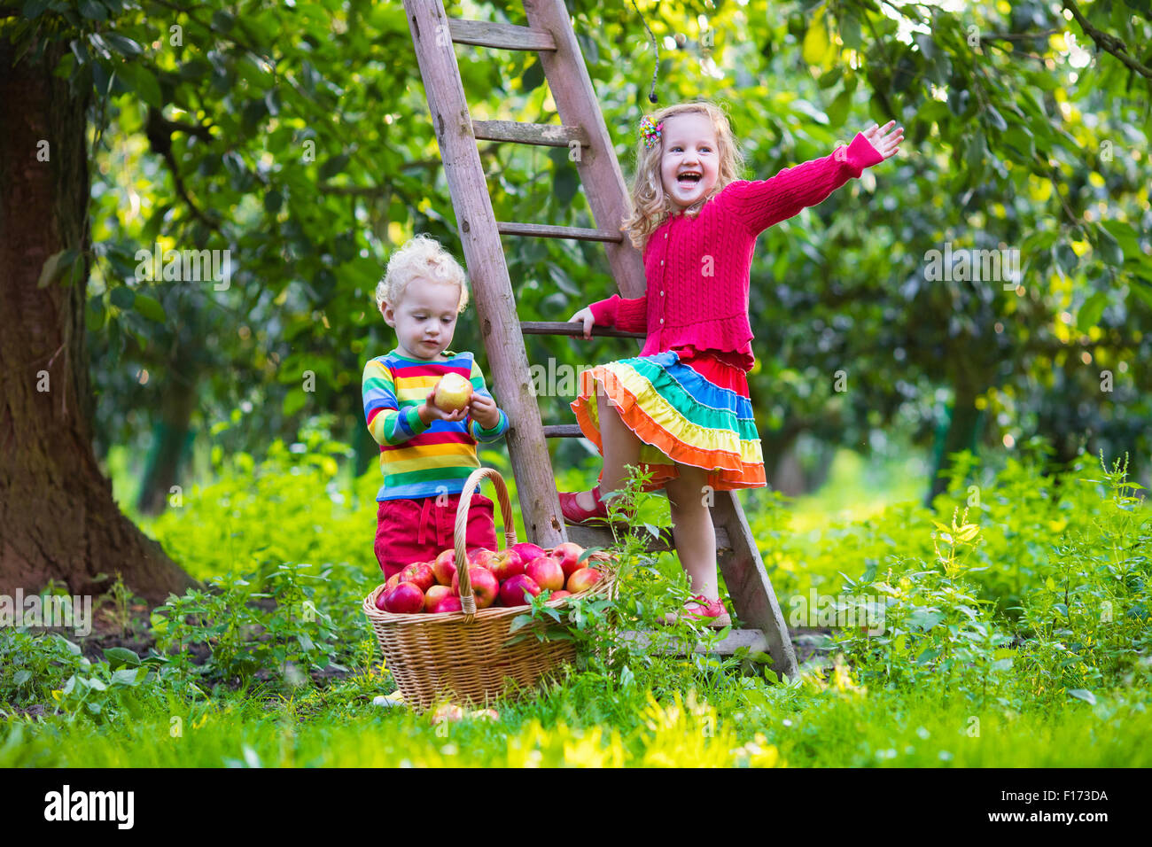Child Picking Apples On A Farm In Autumn Little Girl And
