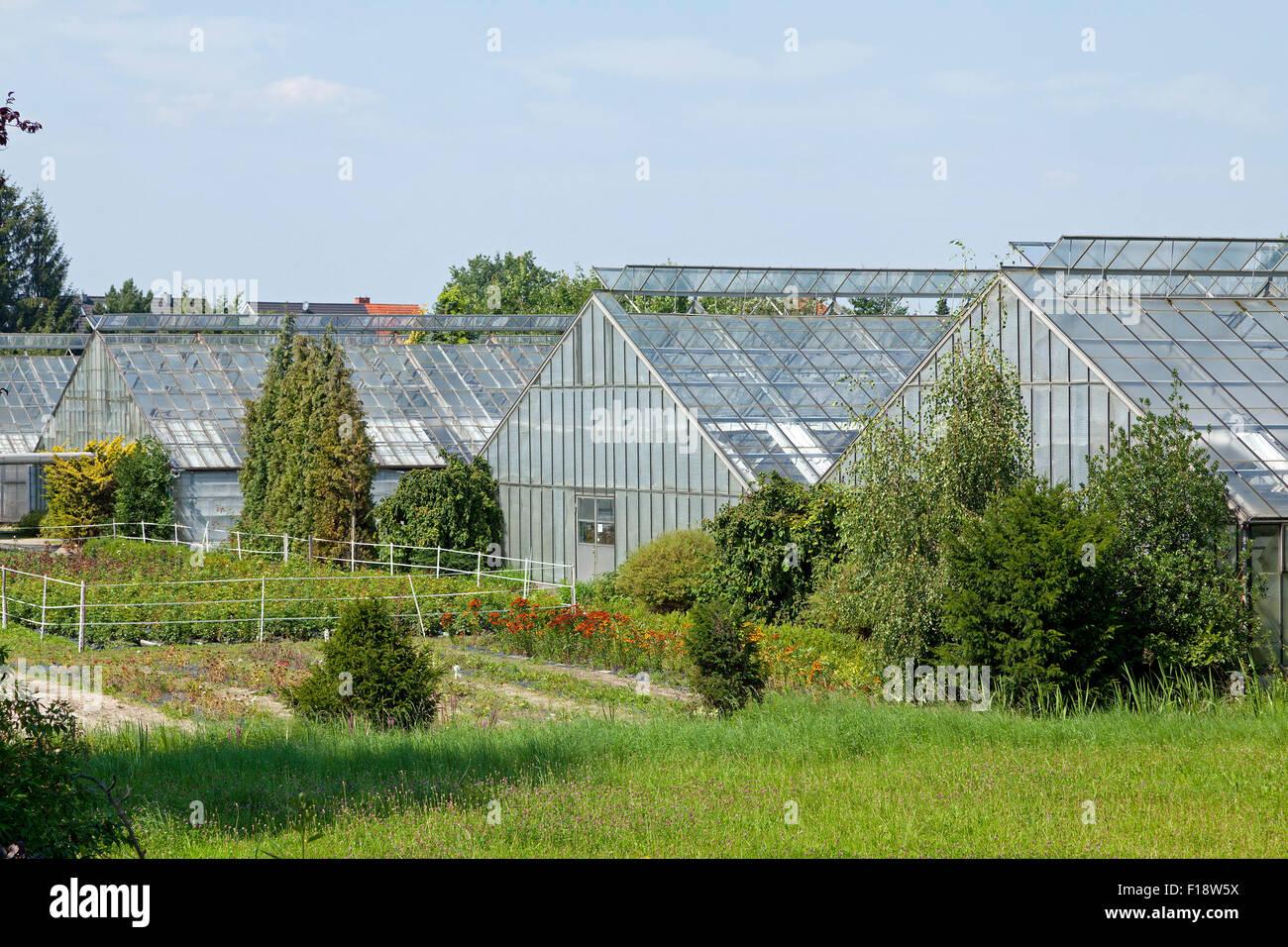 greenhouses curslack vierlande hamburg germany stock. Black Bedroom Furniture Sets. Home Design Ideas