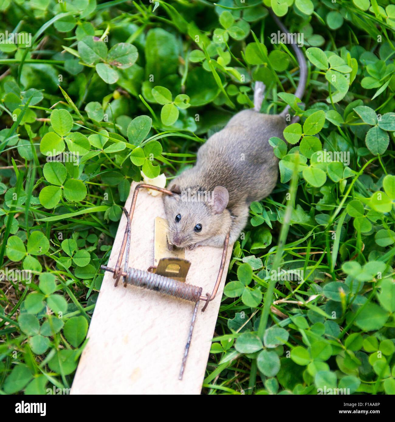 Dead Possum In Garden Garden Ftempo