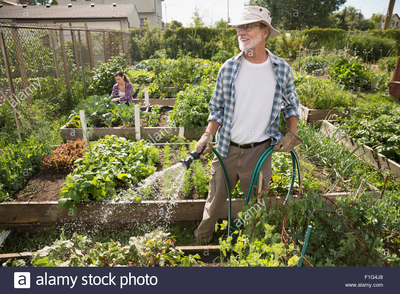 Exceptionnel Man Watering Vegetable Garden With Hose