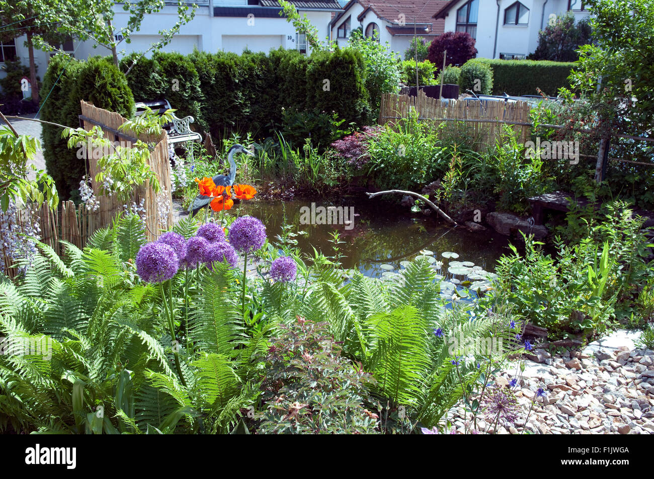 Gartenteich  Gartenteich; Wasser; Wasserpflanze Stock Photo, Royalty Free Image ...
