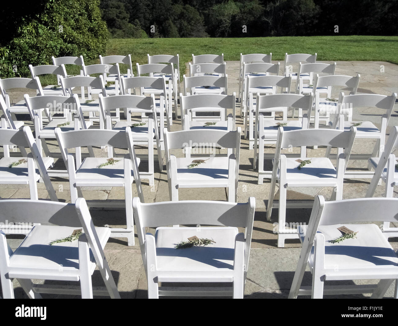 White Chairs At A Wedding Indoor Stock Photo: Bright White Wooden Chairs Are Lined Up And Awaiting