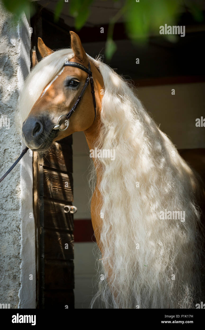 long manes stock photos - photo #3