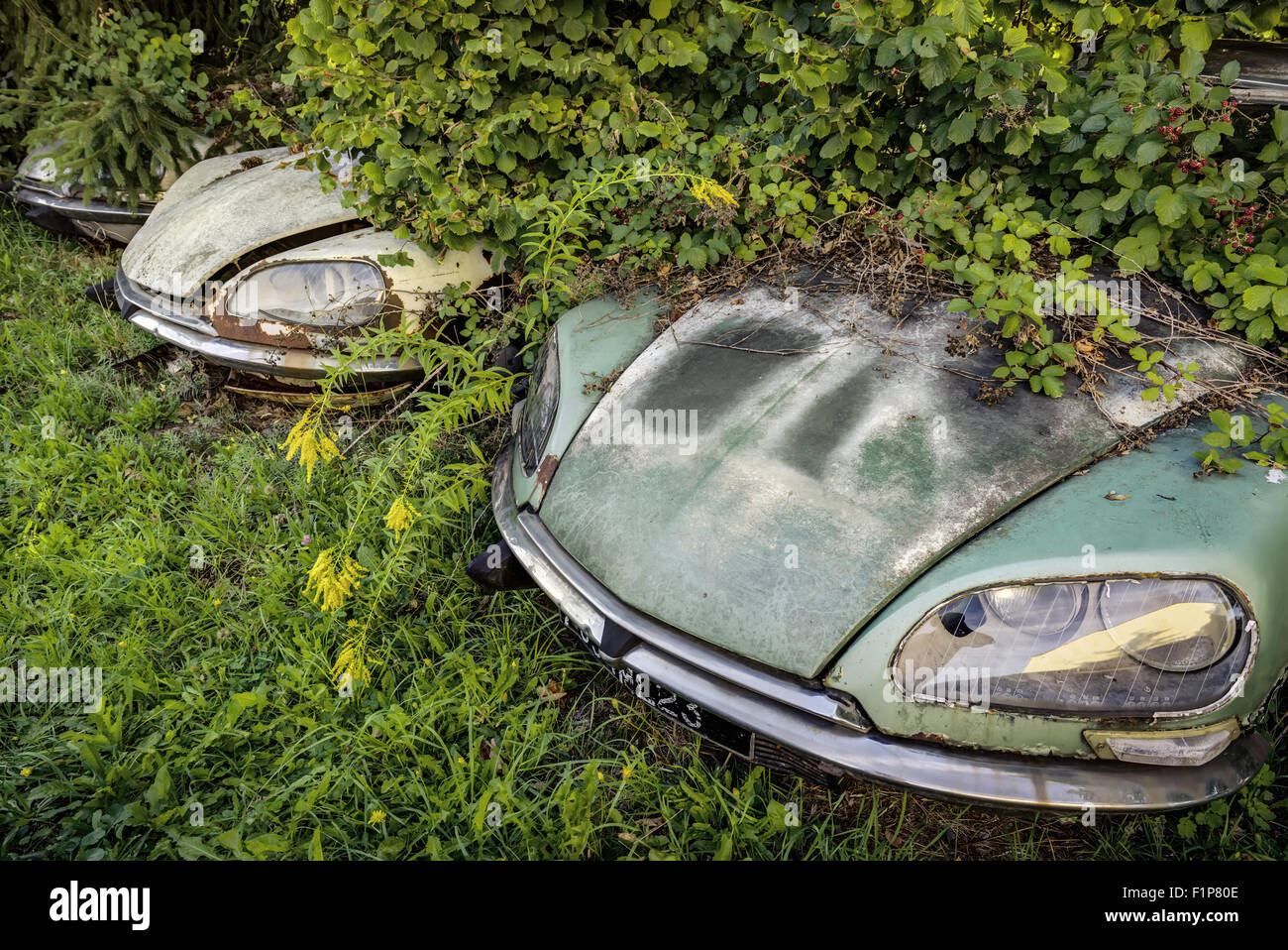Junk Yard With Overgrown Rotten Citroen Ds Classic Cars Stock