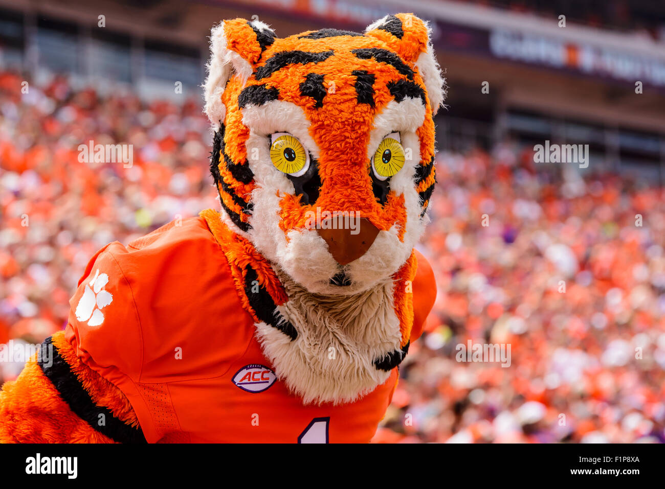 Clemson Tiger mascot in action during the NCAA Football ...