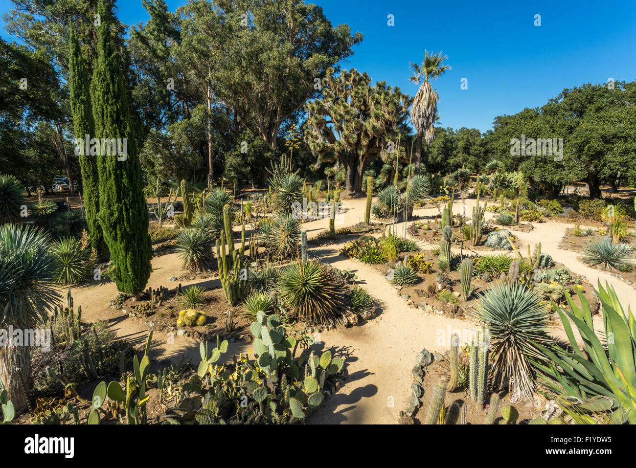 Stock Photo   The Arizona Cactus Garden, (or Refered To As The Stanford  Cactus Garden,) Is A Botanical Garden That Specializes In Cacti And  Succulents