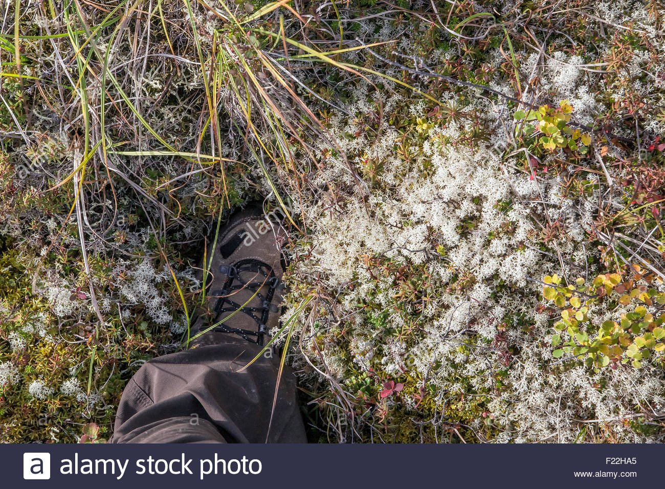 shoe-sinking-into-the-thick-spongy-tundr