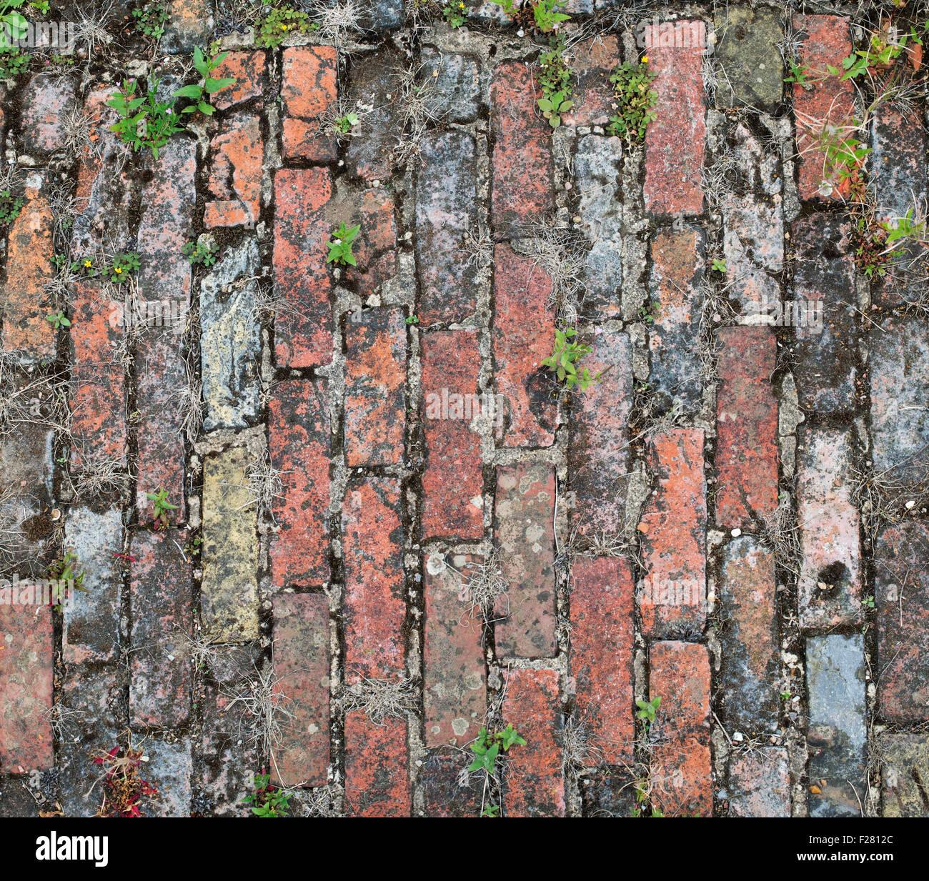 Old Brick Garden Path Pattern Stock Photo Royalty Free