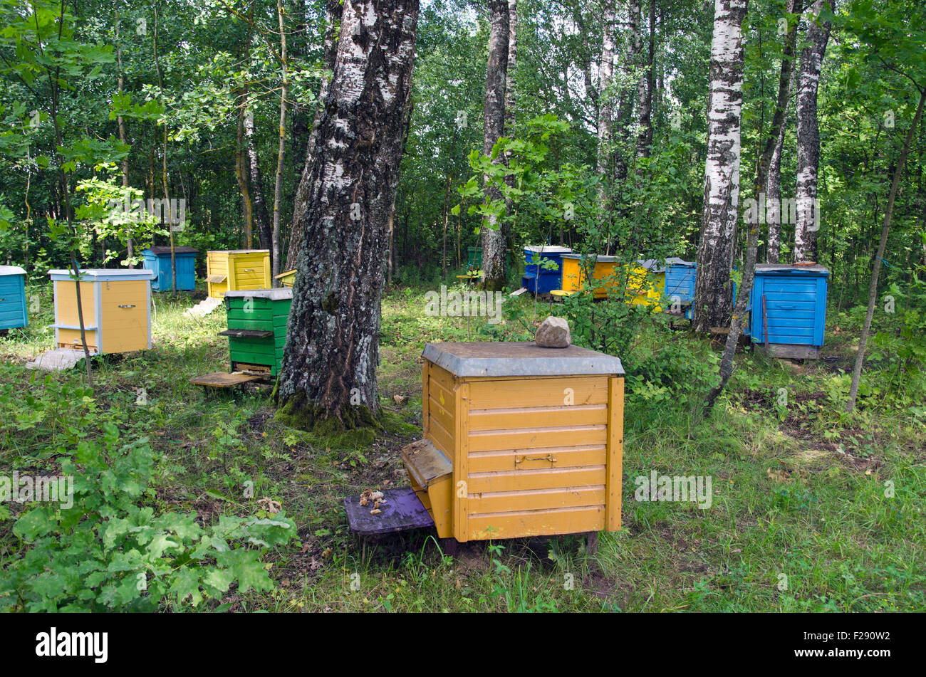 Multicolored beehives between birch trees grove Stock Photo, Royalty ...