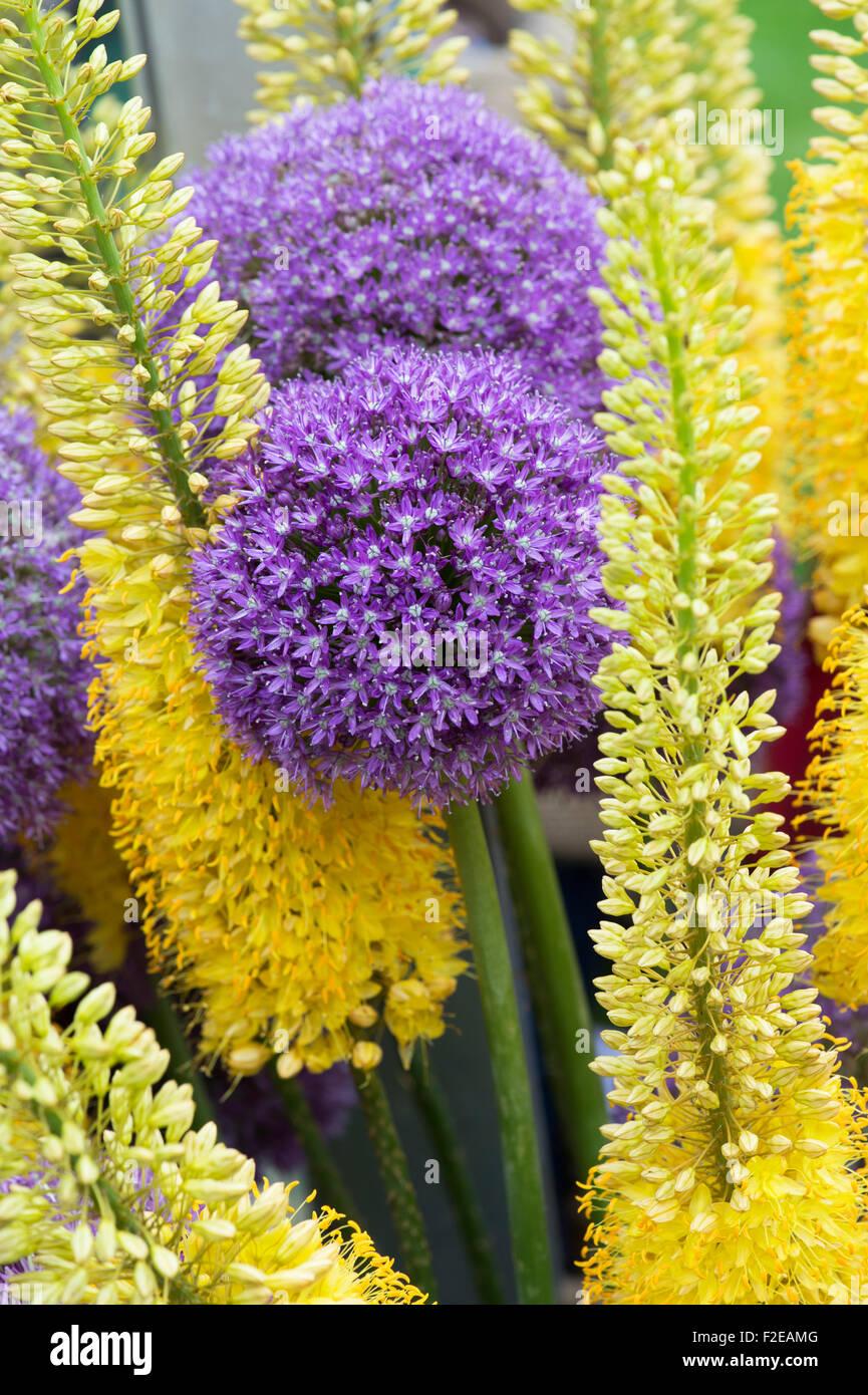 How to Plant Eremurus advise