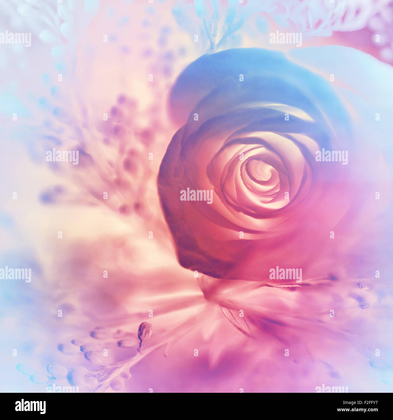 Dreamy Rose Background Abstract Pink And Purple Floral Wallpaper Stock Photo Royalty Free