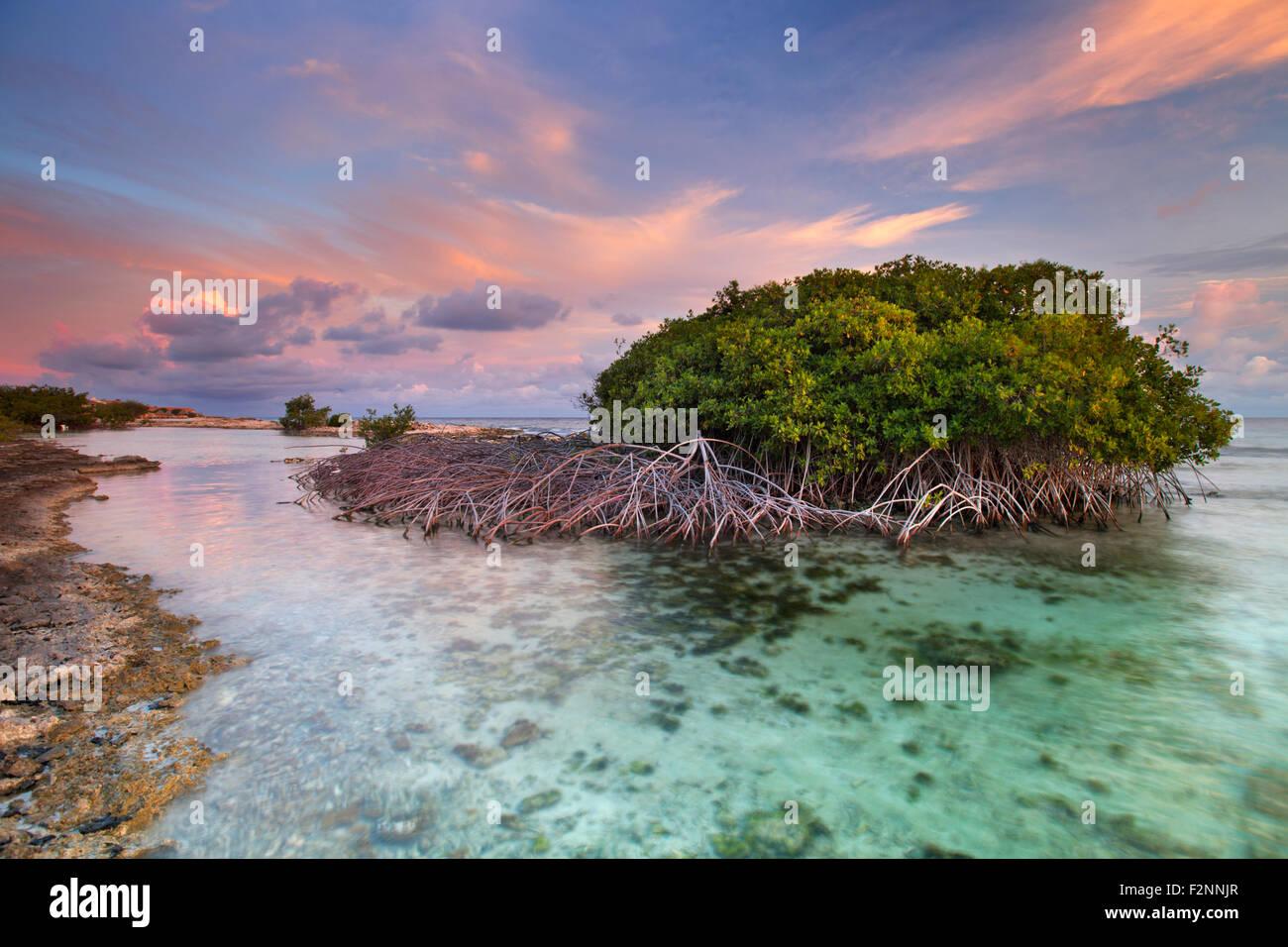 Lagoon Tropical Island: Mangrove Trees In A Tropical Lagoon On The Island Of