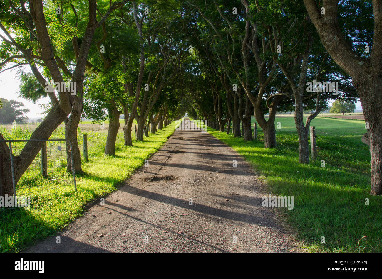 A long tree lined driveway entrance to a farm in New South ...