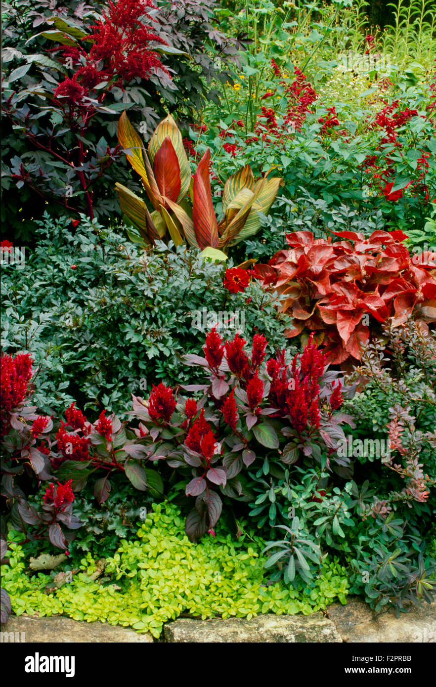 red flowers and foliage in landscape garden design with rock border columbia missouri usa