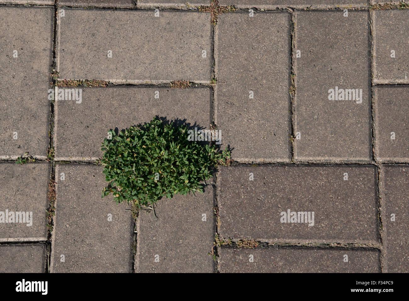 Rectangular brick patio paving blocks form an interesting pattern ...