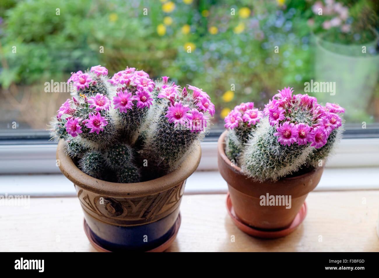 how to take care of a mammillaria cactus