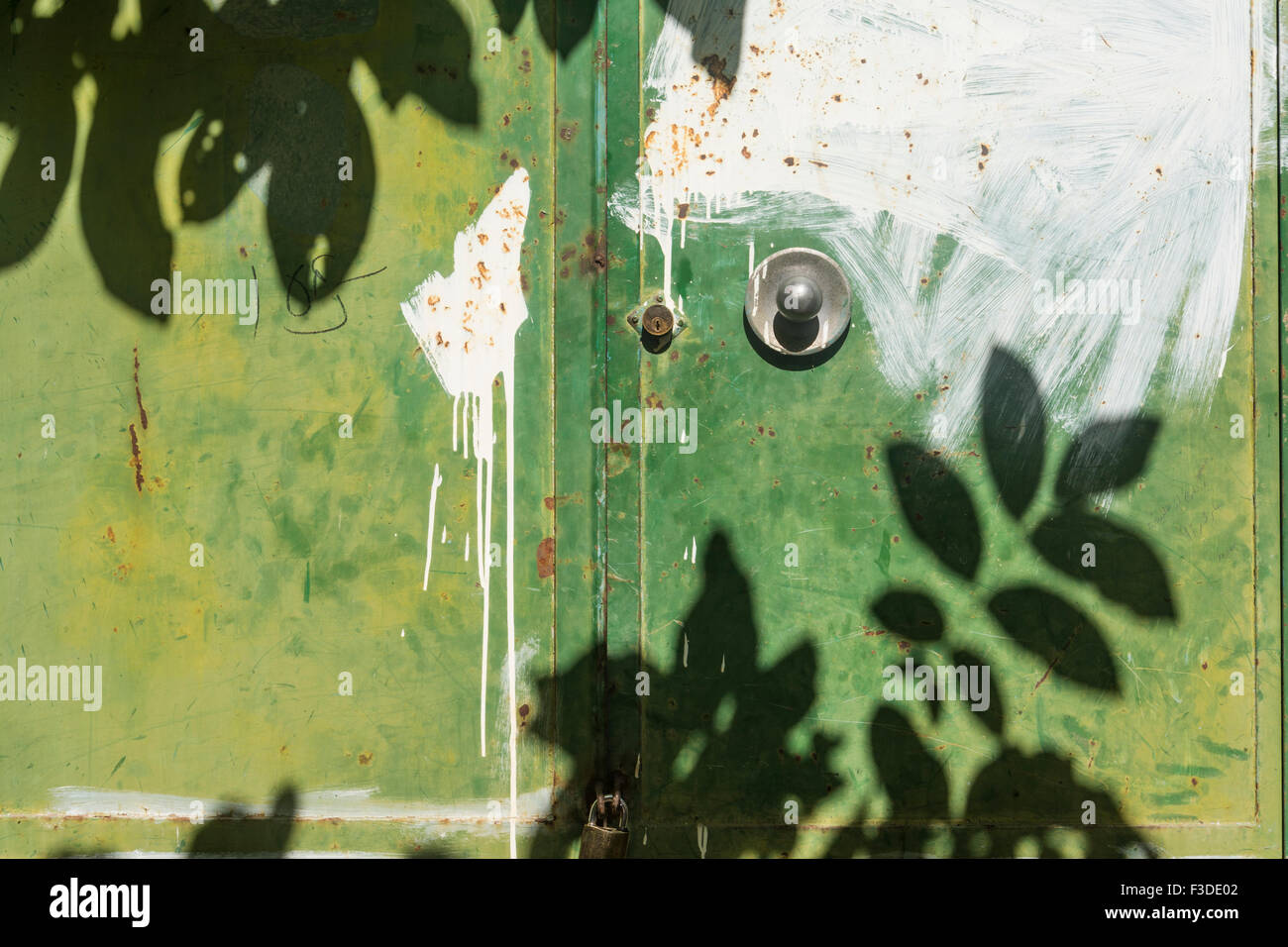 shadow of tree leaves on green house door with round knob