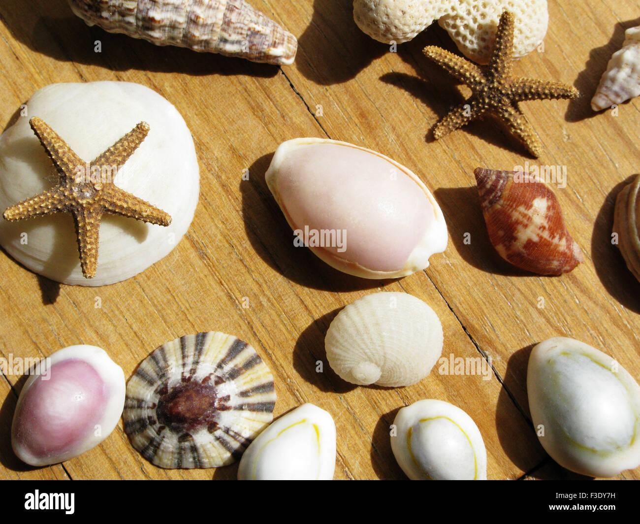assorted seashells dried starfish stock photo royalty free image