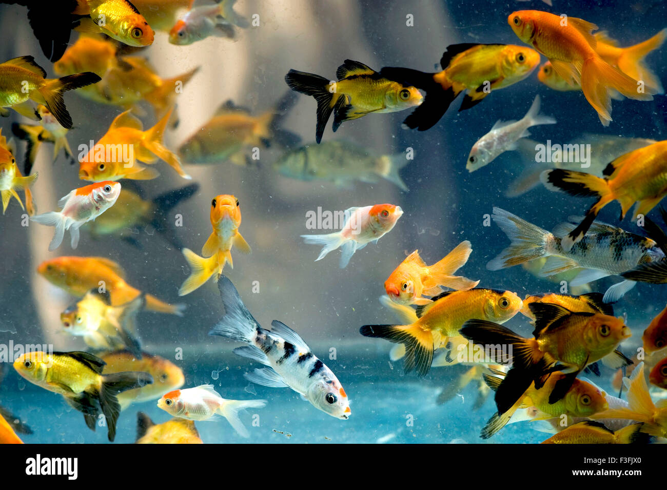 Types Of Fish That Live In Tanks Pictures To Pin On