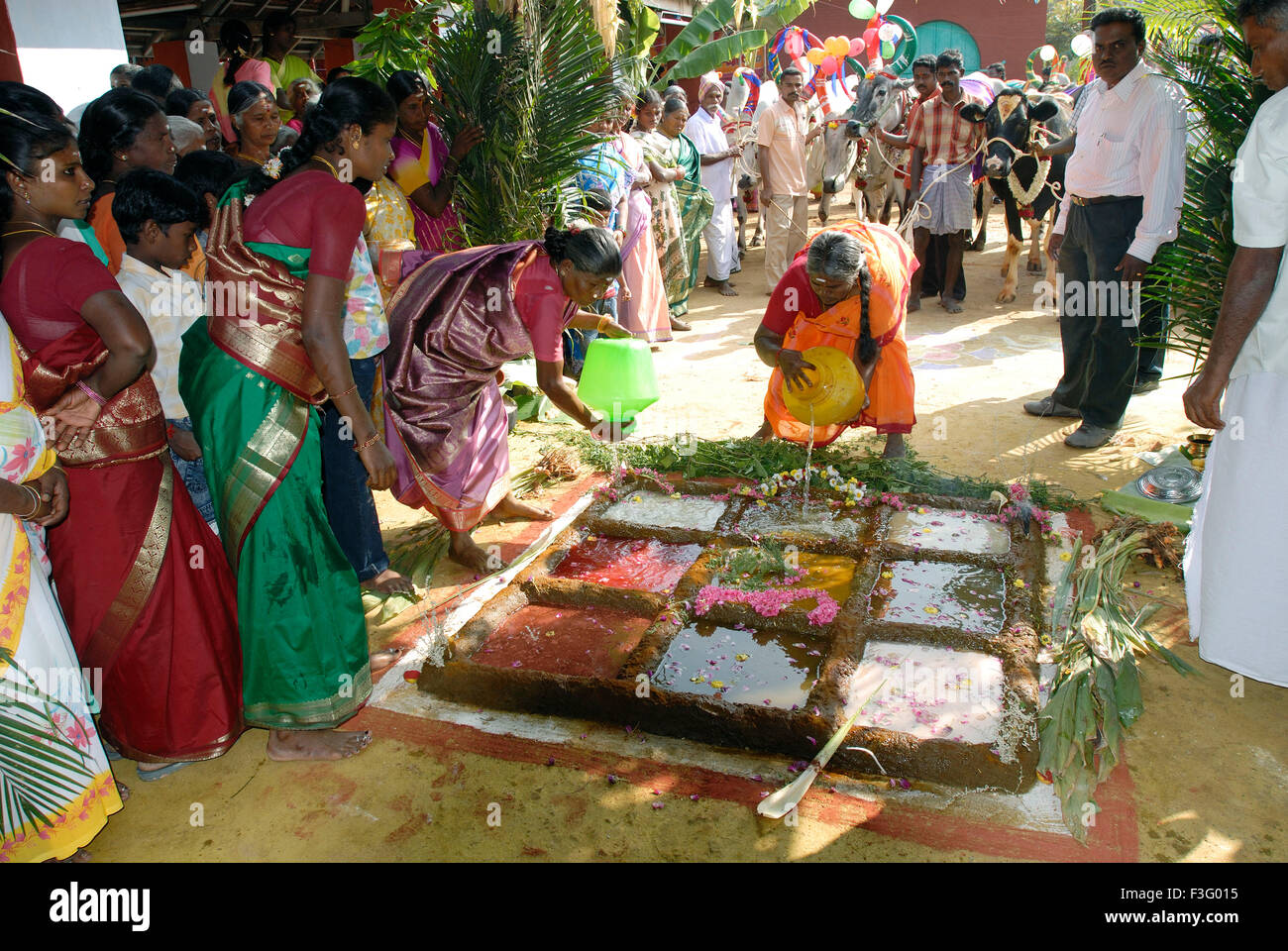 harvest festival pongal Pongal wishes, messages and pongal greetings well, if you happened to be in tamil nadu on january it is a part of one of the most famous festival of tamil culture pongal pongal is the harvest festival of tamil people and they conduct is in 2 or three days.