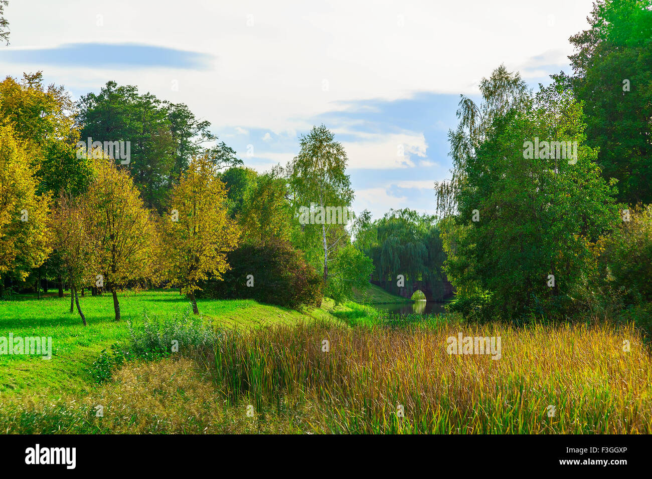 Autumn Nature with Colorful Trees and Bushes on Green Grass near ...
