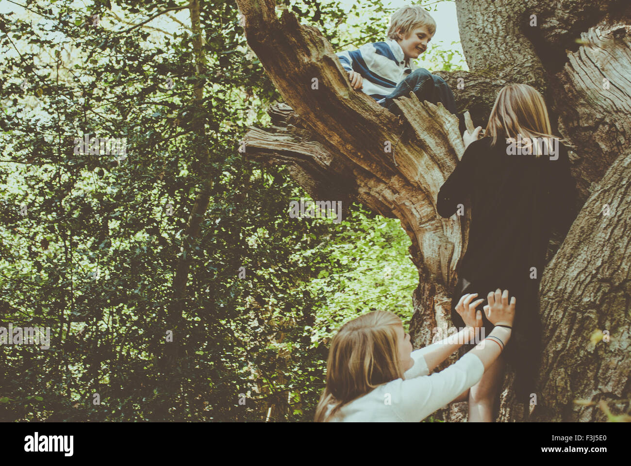 Kids helping each other up a tree Stock Photo, Royalty Free Image ...