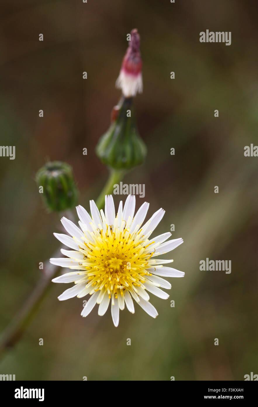wildflower-F3KXAH.jpg