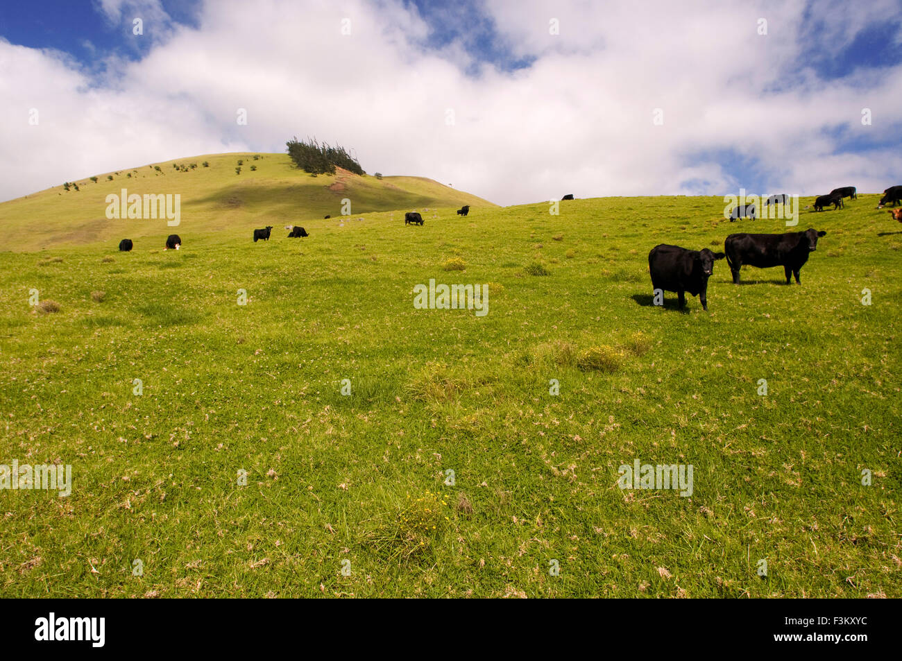 Image gallery hawaii countryside - Vacation houses in the countryside ...