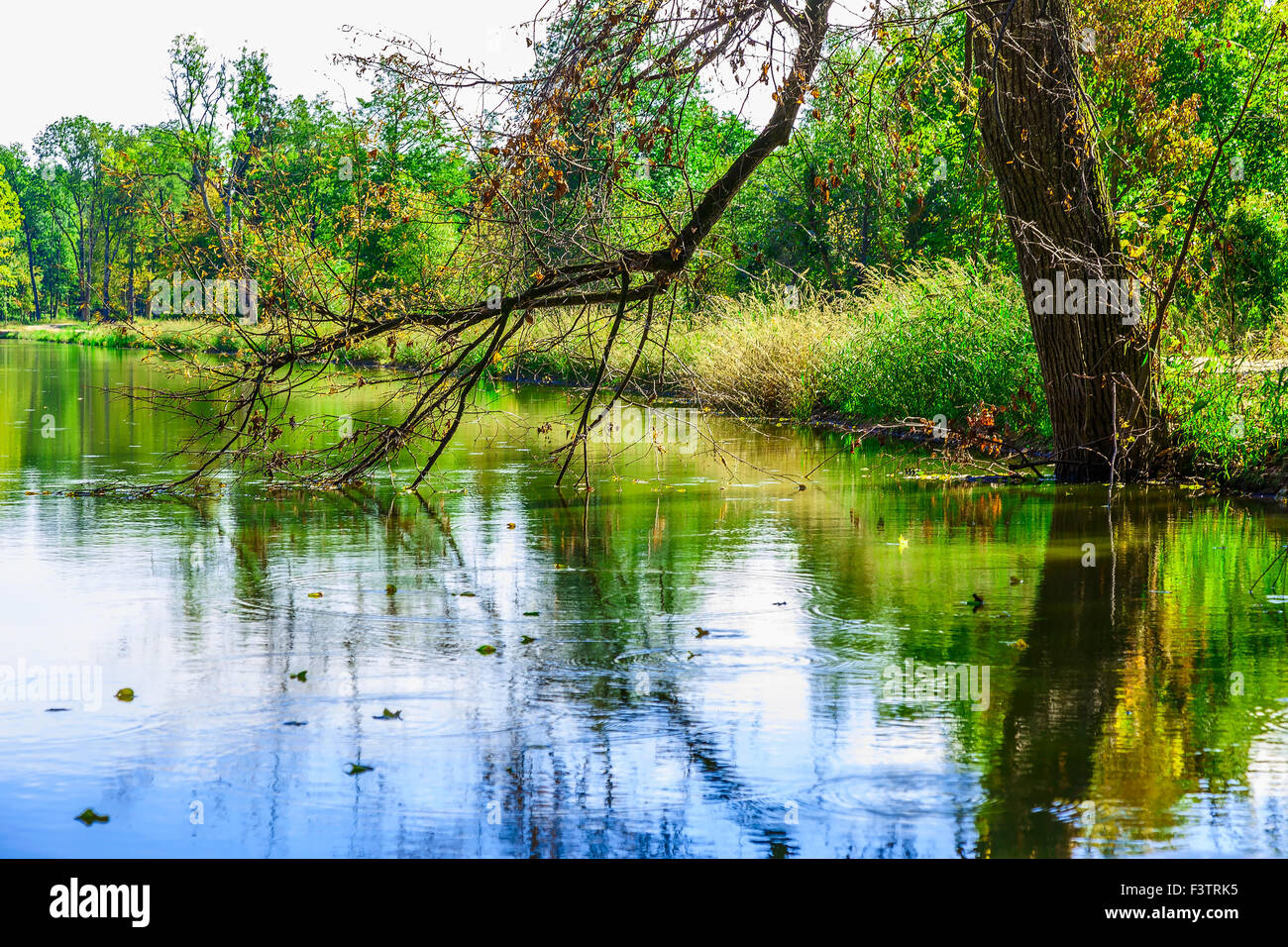 Bare Branch of Tree Touching Surface of Water in the Background of ...