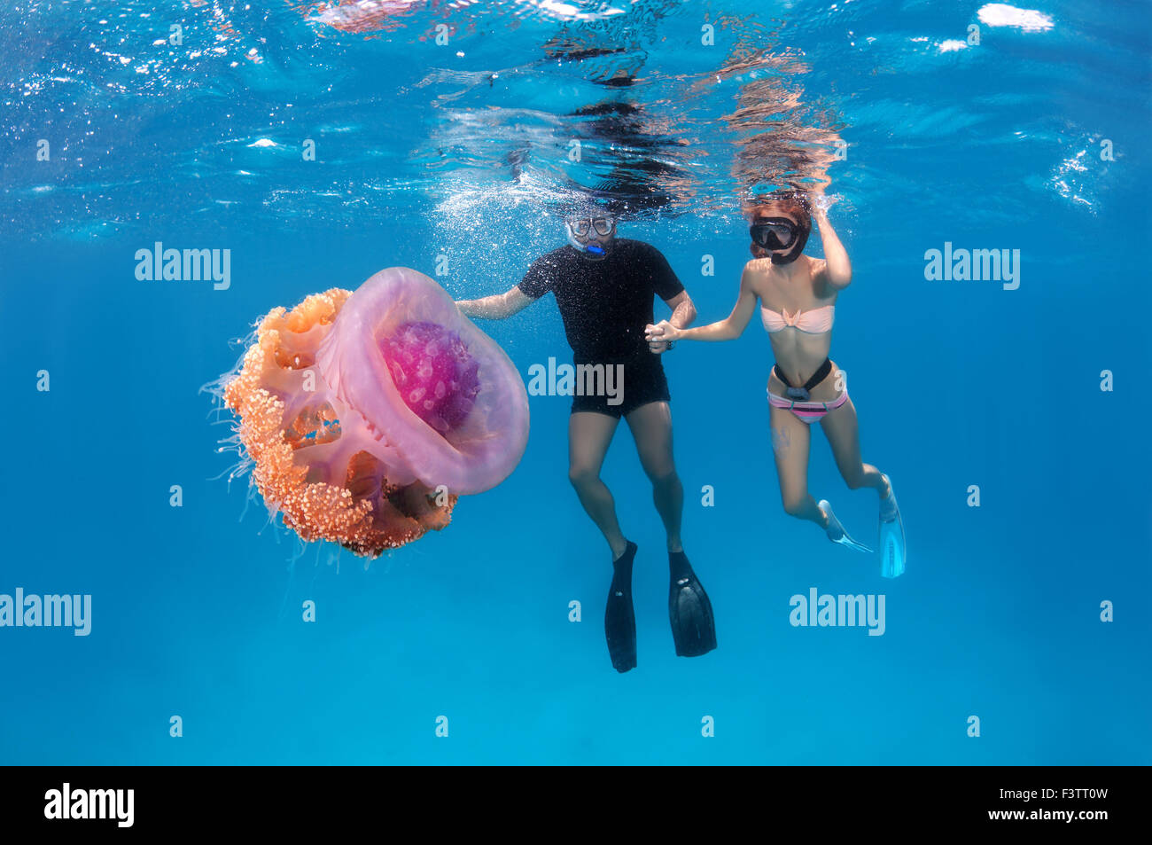 A young couple looks at Cauliflower jellyfish (Cephea ...