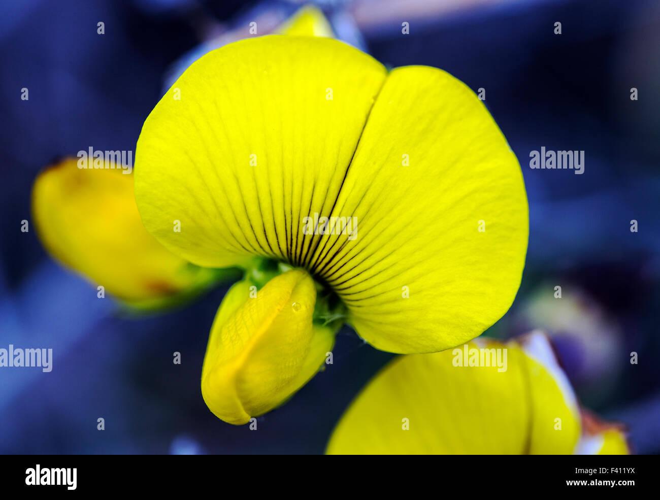 National hawaiian flower images flower wallpaper hd national hawaiian flower image collections flower wallpaper hd national hawaiian flower image collections flower wallpaper hd izmirmasajfo