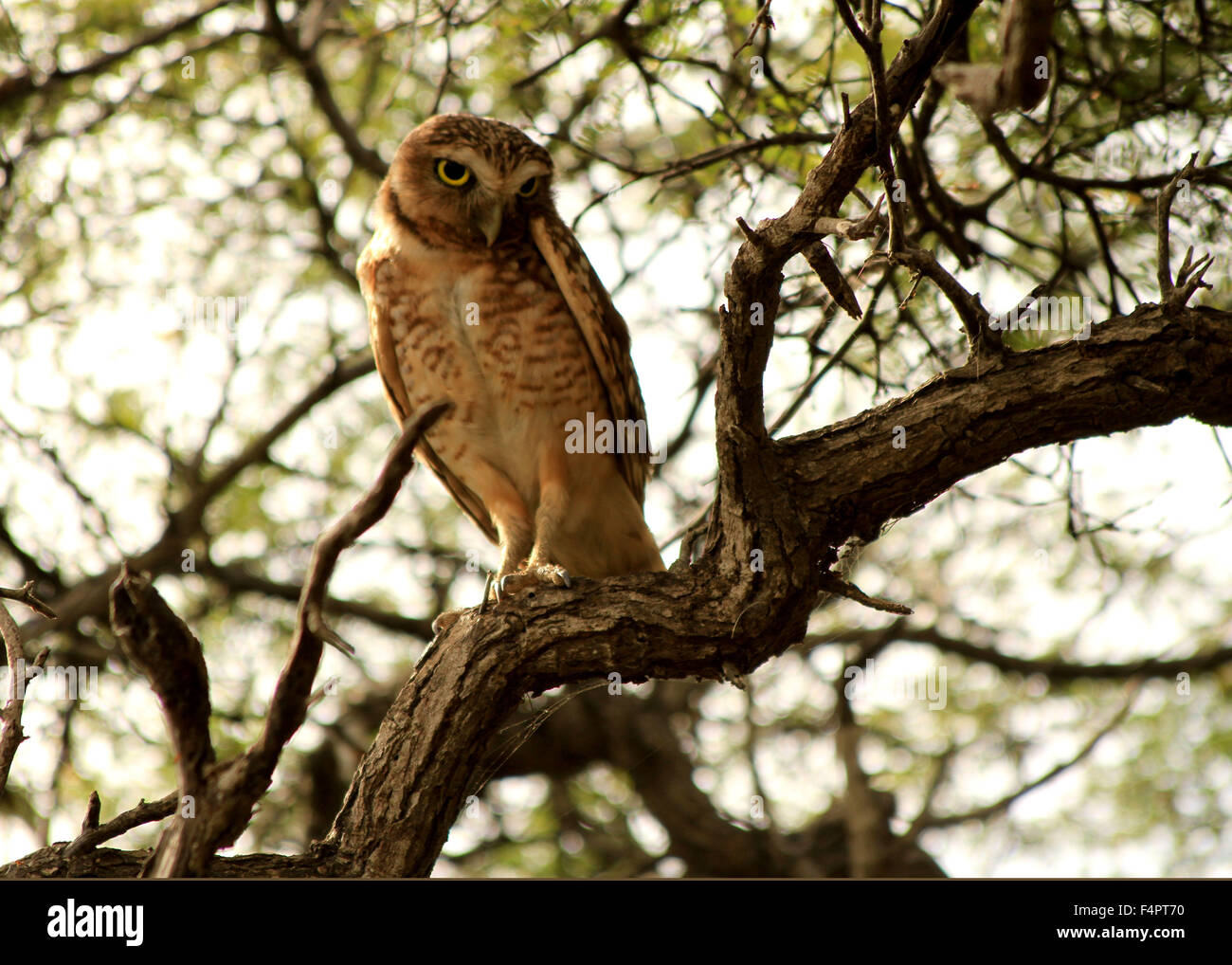 owls turning stock photos owls turning stock images