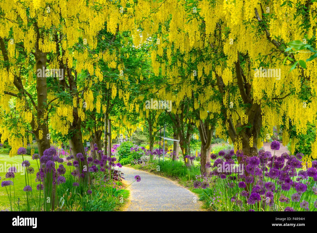 Exceptionnel British Columbia, Canada, Vancouver VanDusen, Botanical Garden, Botanical,  Garden, Summer, Way