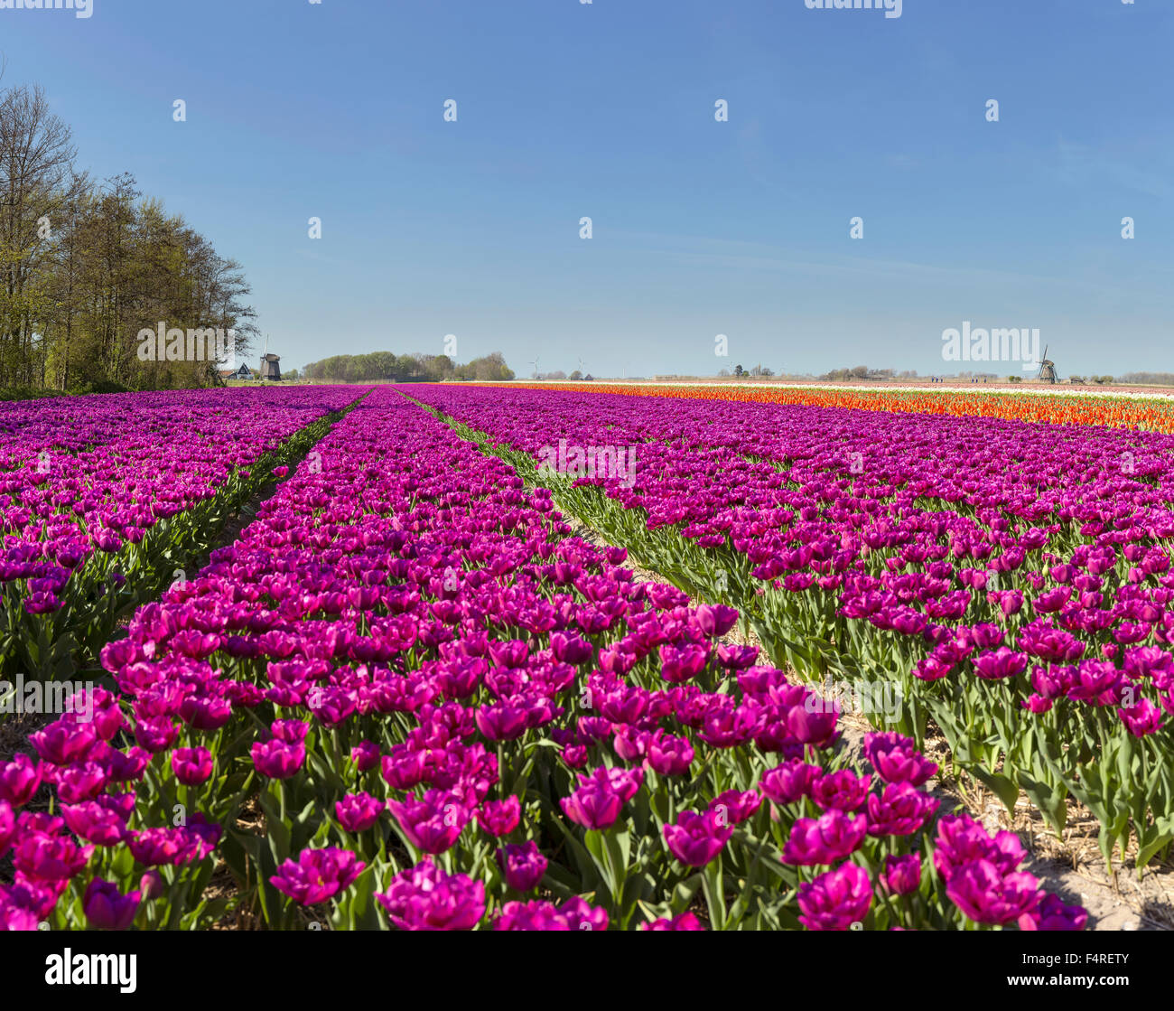 Image gallery landscape flowers netherlands for Flower landscape