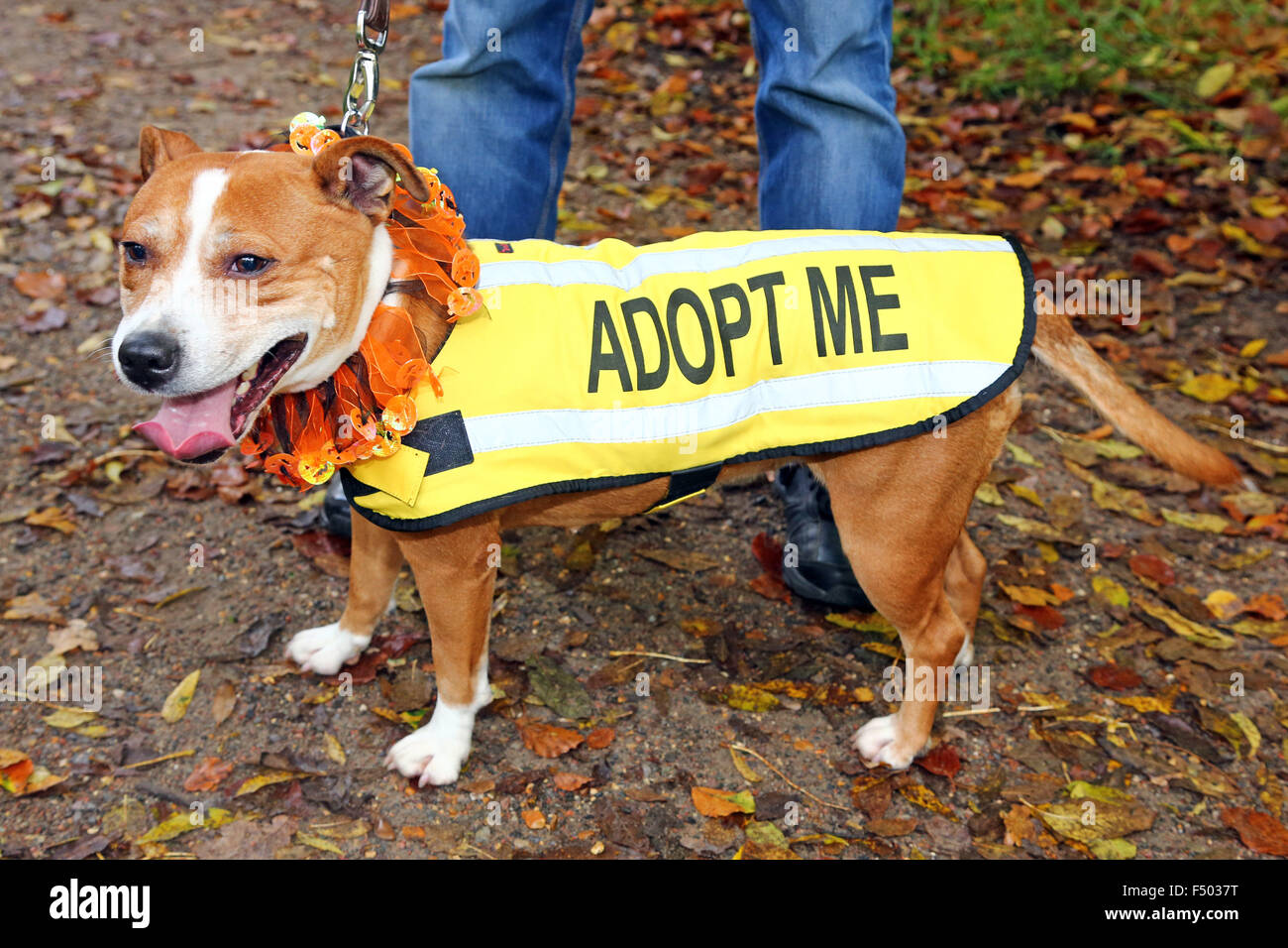 London UK 25th October 2015 A dog available for adoption at the