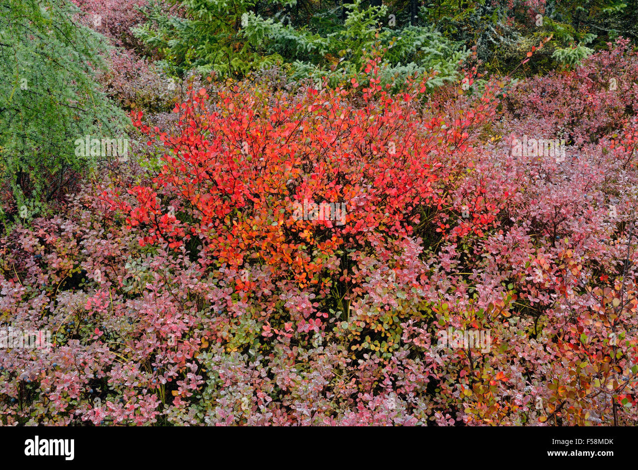 Arctic Tundra Shrubs | www.imgkid.com - The Image Kid Has It!