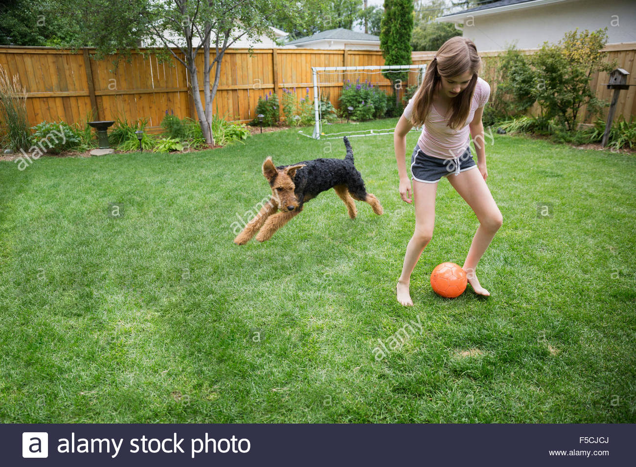 playing soccer with dog in backyard stock photo royalty free