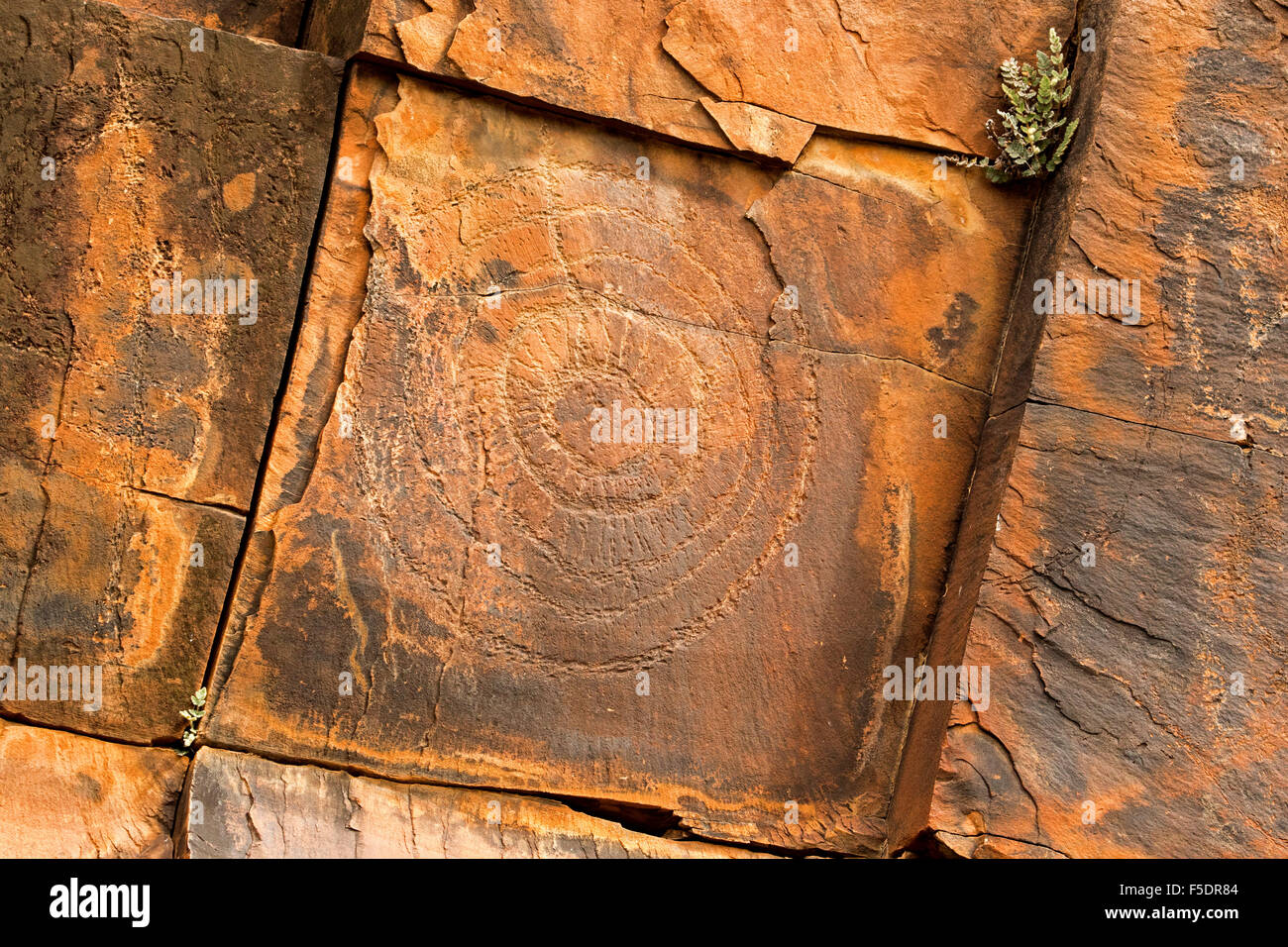 Ancient aboriginal rock art engravings symbols of initiation rites ancient aboriginal rock art engravings symbols of initiation rites on red stone walls in flinders ranges in outback australia biocorpaavc Image collections