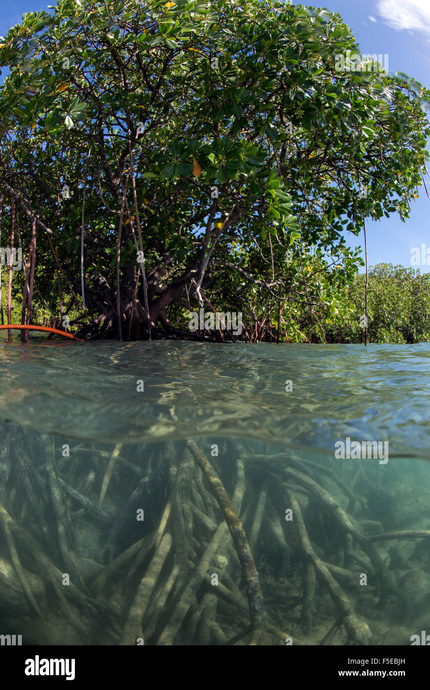 Fiji Mangrove Stock Photos \u0026 Fiji Mangrove Stock Images - Alamy