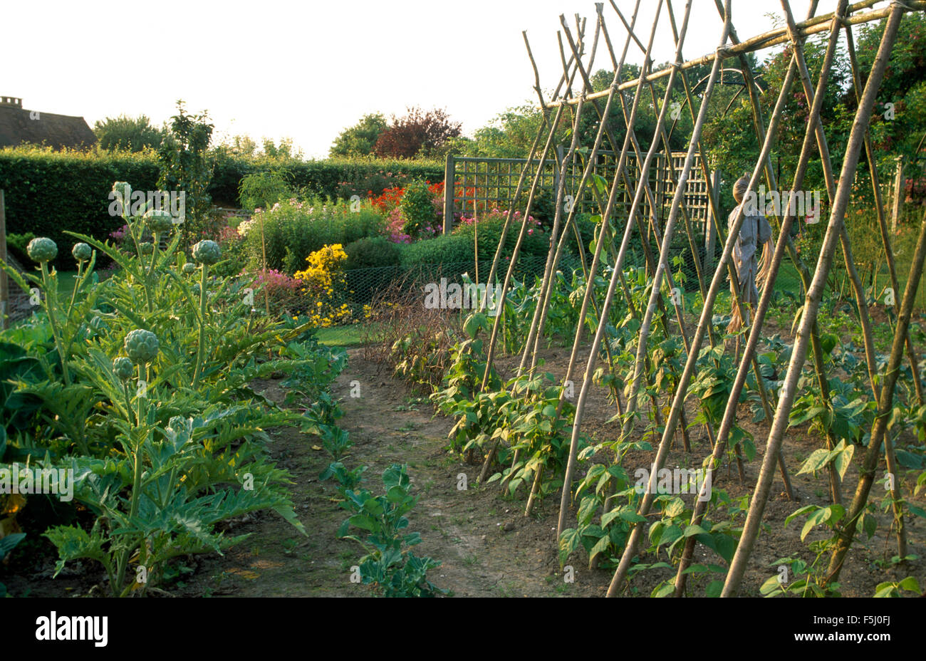 Country vegetable gardens - Globe Artichokes And A Row Of Bean Sticks With Runner Beans In Large Country Vegetable Garden