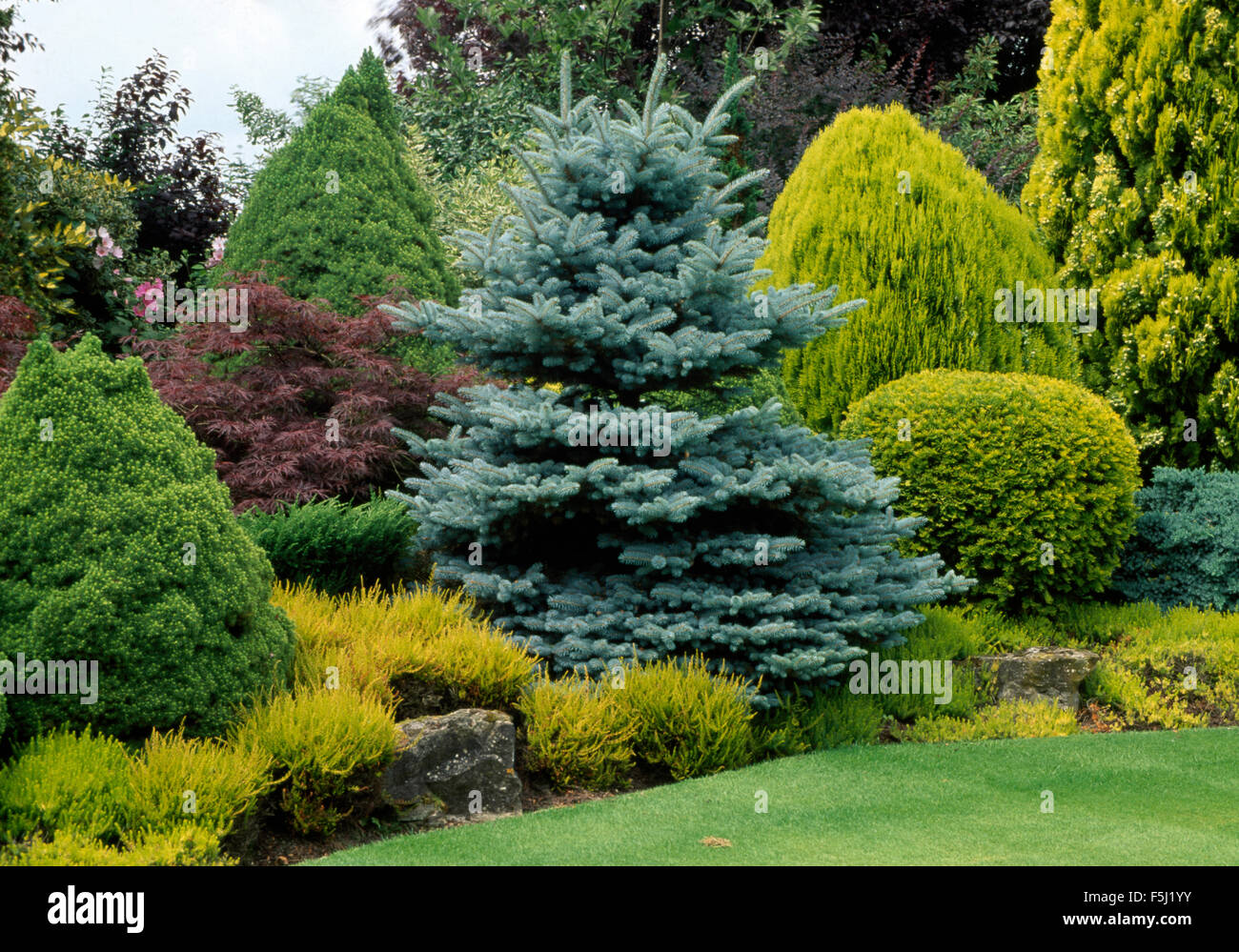 Well tended conifer border with a variety of conifer for Large bushes for landscaping