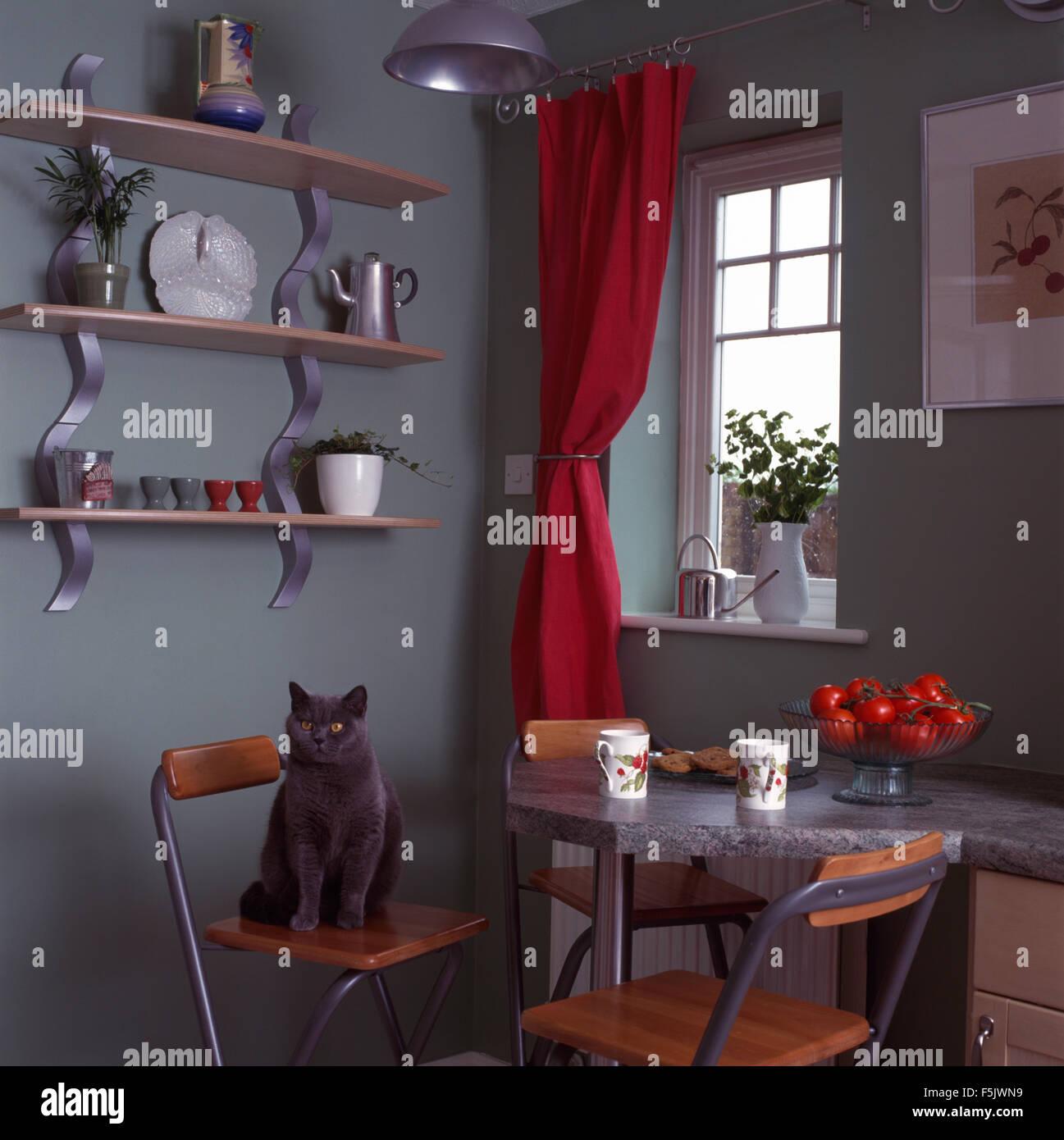 Grey cat sitting on stool at breakfast bar in nineties kitchen