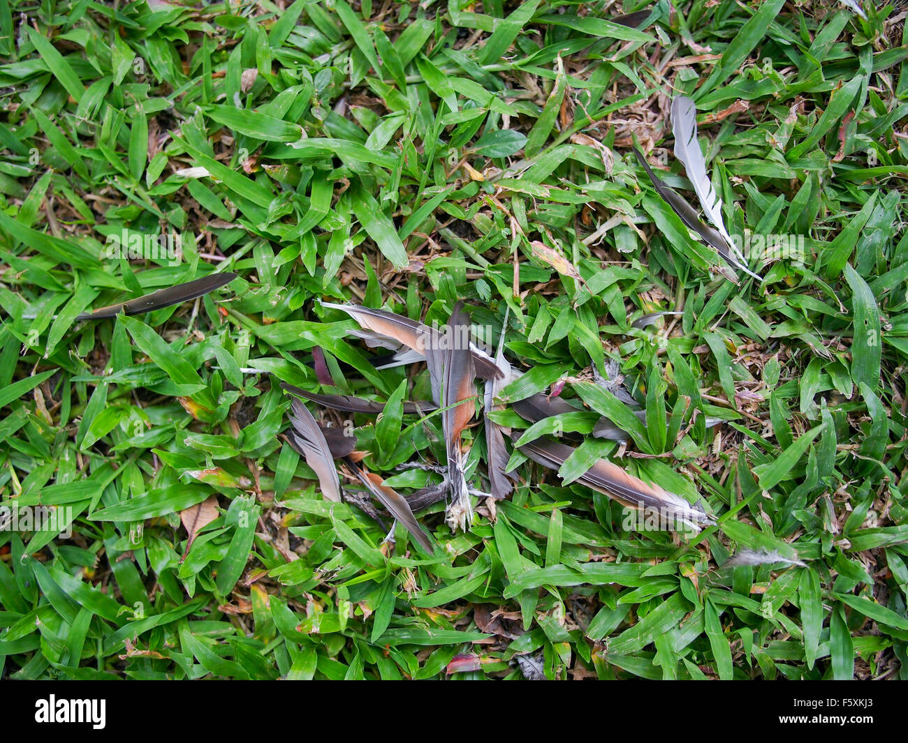 Feather Of Dead Bird On Grass Field